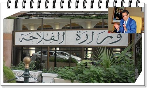 مخطط المديرية الجهوية للفلاحة الدار البيضاء – السطات لمواجهة تداعيات قلة التساقطات المطرية
