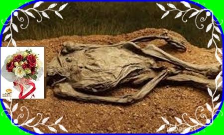 """"""" الروح اعزيزة عند الله """"قتلها و دفنها ببهو المنزل بعد فصله للجمجمة"""