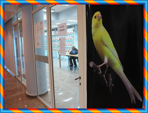 """الرباط تحتضن المسابقة المشتركة الأولى في """"الأورنيثولوجيا"""" بمشاركة 400 طائر"""