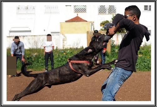 """عصابة اجرامية من 4 عناصر لها سوابق تسلب مواطنين بشاطئ الجديدة الصخري""""المون"""" بمساعدة كلب"""