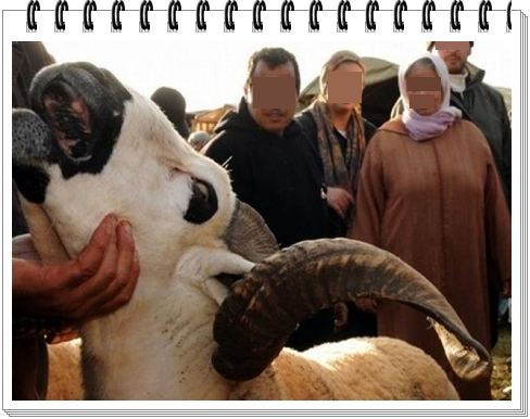 حولي العيد:غريب أمر هذا الزوج مع الحولي و زوجته و مبلغ مالي