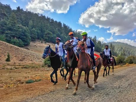 معرض الفرس يتوج الفائزينبالدورة الثانية لسباق القدرة والتحمل للخيل بغابات الأرز بالأطلس المتوسط