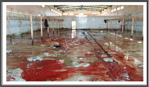 هل يستحق مستهلكو اللحوم الحمراء كل هذا الاهتمام بعد تدارس حالة المجازر بالاقليم؟