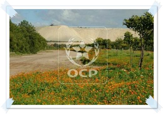 """مجموعة OCP تطلق آلية """"المثمر لخدمات القرب"""" من أجل مواكبة متميزة للفلاحين"""